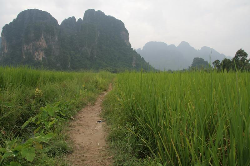 Rice Path