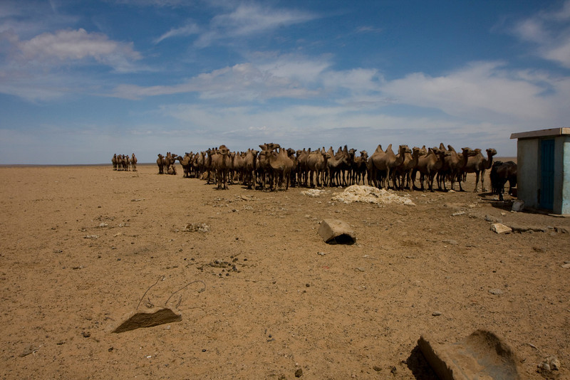 Camel Queue