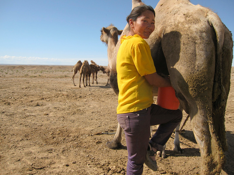 Camel Milk Yoga