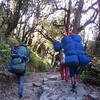 Porters racing down the mountain