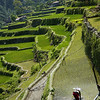 Rice Lines
