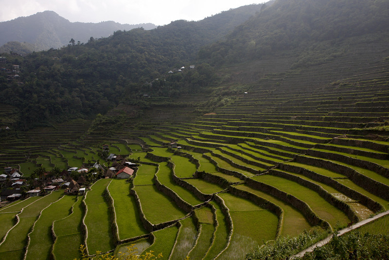 Batad Terraces
