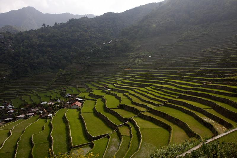 Batad Terraces