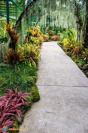Paths through Singapore Botanic Gardens