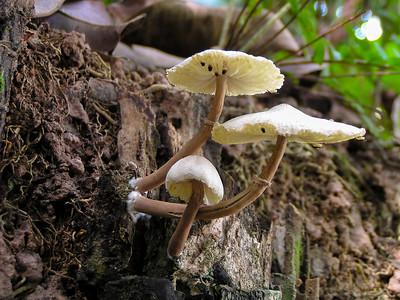 Central Catchment Nature Reserve, Singapore