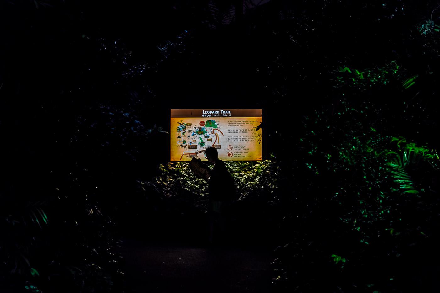 man looking at a sign with the Singapore night safari map