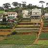 Growing Villages