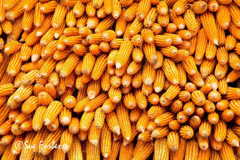 Corn being stored in Jagat, Annapurna Circuit, Nepal
