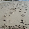 Gold Coast Beach was my backyard in #Room753