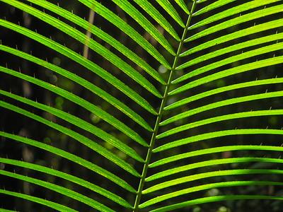 Kuranda, Queensland, Australia