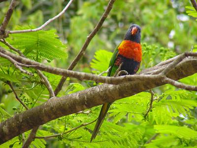 Yungaburra, Queensland, Australia