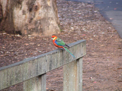 Gloucester National Park, Western Australia