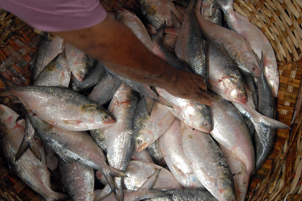 Fresh fish being sold at the Fish market, Dhaka.<br /> Dhaka (Bangla: ঢাকা, pronounced [ɖʱaka])— (Dacca) is the capital city of Bangladesh (Bengali: বাংলাদেশ [ˈbaŋlad̪eʃ] Bangladesh). Dhaka, located on the banks of the Buriganga River is a megacity with a population of over 12 million. Dhaka is known as the City of Mosques and renowned for producing the world's finest muslin. it is a center for culture, education and business.