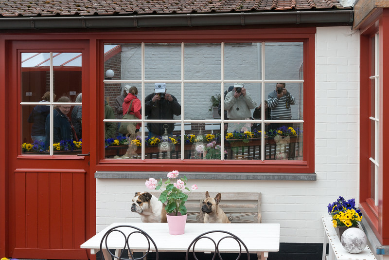 Just as we got off the canal boat, saw this lovely dogs. Bruges, Belgium.