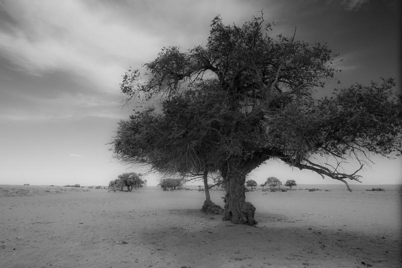 Tree Mirage