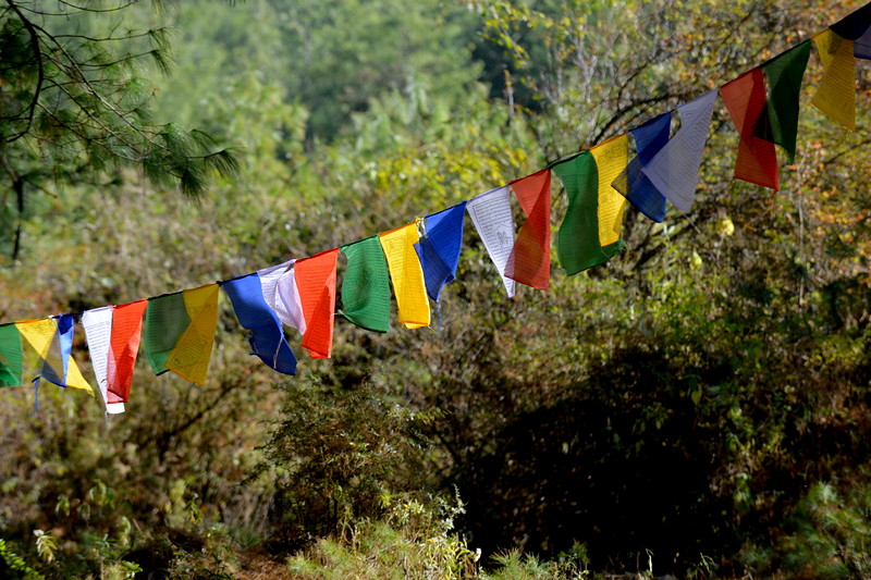 Prayer flags hang on trees and blowing in the wind near base of Taktsang Monastery (Tiger's Nest).