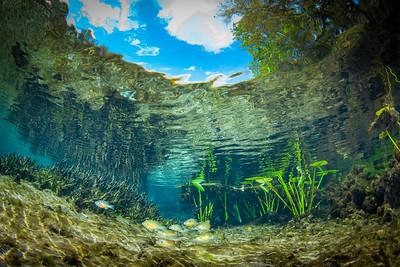 Snell's Window in freshwater springs
