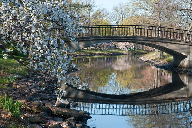 Esplanade Bridge and Blossoms