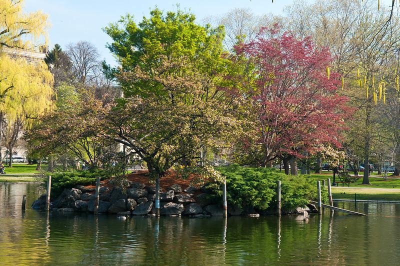 An Island in Boston Garden