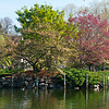 An Island in Boston Garden