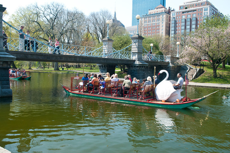 Boston's Swans in Spring