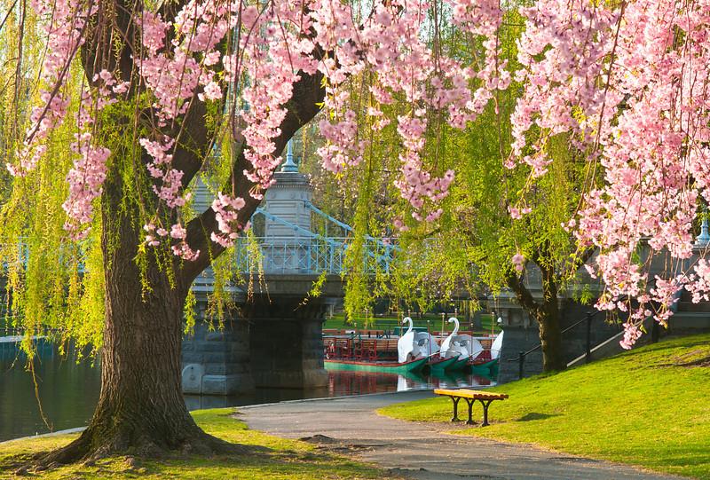 Early Spring at Boston Public Gardens