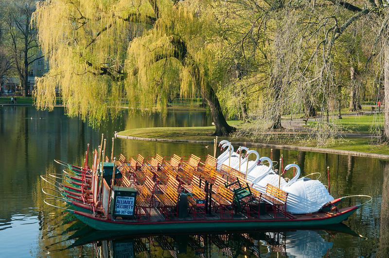 The Swan Boats Await