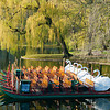 The Swan Boats Await