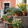 Spring Flowers on Beacon Hill 2