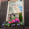 Window Box Flowers with Reflections of Cherry Blossoms
