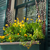 Spring Window Box in Boston