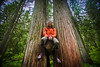 Giant Cedars, Mount Revelstoke National Park, British Columbia, Canada.