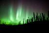 Tree silhouettes and aurora borealis, Blue Lakes, Northern British Columbia.