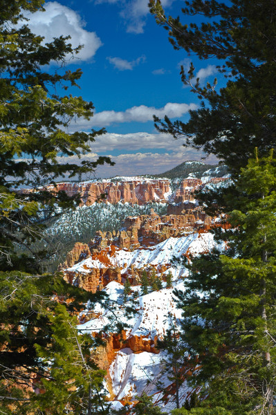 Snowy Bryce through the Trees