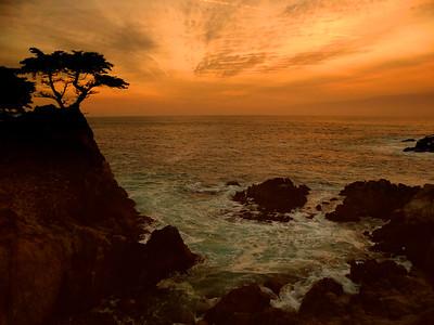 Lone Cypress Tree - Pebble Beach, CA