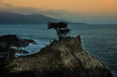 Lone Cypress Tree - Pebble Beach, CA 1