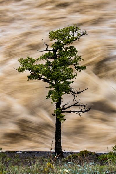 Bow Falls, Torrential Rains of June 2013 in Banff National Park.