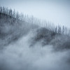 """Scenes from the 2013 Banff Centre Wilderness Photography Workshop"" XVIII, Kootenay National Park, Alberta, Canada."
