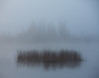Foggy scenes from Vermilion Lakes, Banff National Park