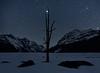 Jupiter rises above dead tree at Peyto Lake, Banff National Park
