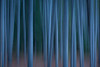 Abstract forest, Banff National Park