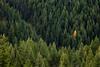 Fall, Kootenay National Park