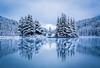 """""""Singled Out"""", Snowfall at Two Jack Lake, Banff National Park, Alberta, Canada."""
