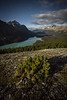 """Peyto Palette"" II, Nighttime at Bow Summit, Banff National Park, Alberta, Canada."