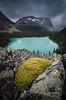 """""""O'Hara Bliss"""" X, Lake O'Hara, Yoho National Park, BC, Canada."""