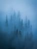 """Standing Guard"" IV, Banff National Park, Alberta, Canada."