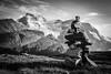 """Alpine Layers"" X, Wilcox Pass, Jasper National Park, Alberta, Canada."