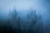 """Standing Guard"" VI, Banff National Park, Alberta, Canada."