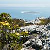 View to Robbin Island
