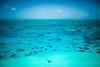 Belizean Bliss - 129
